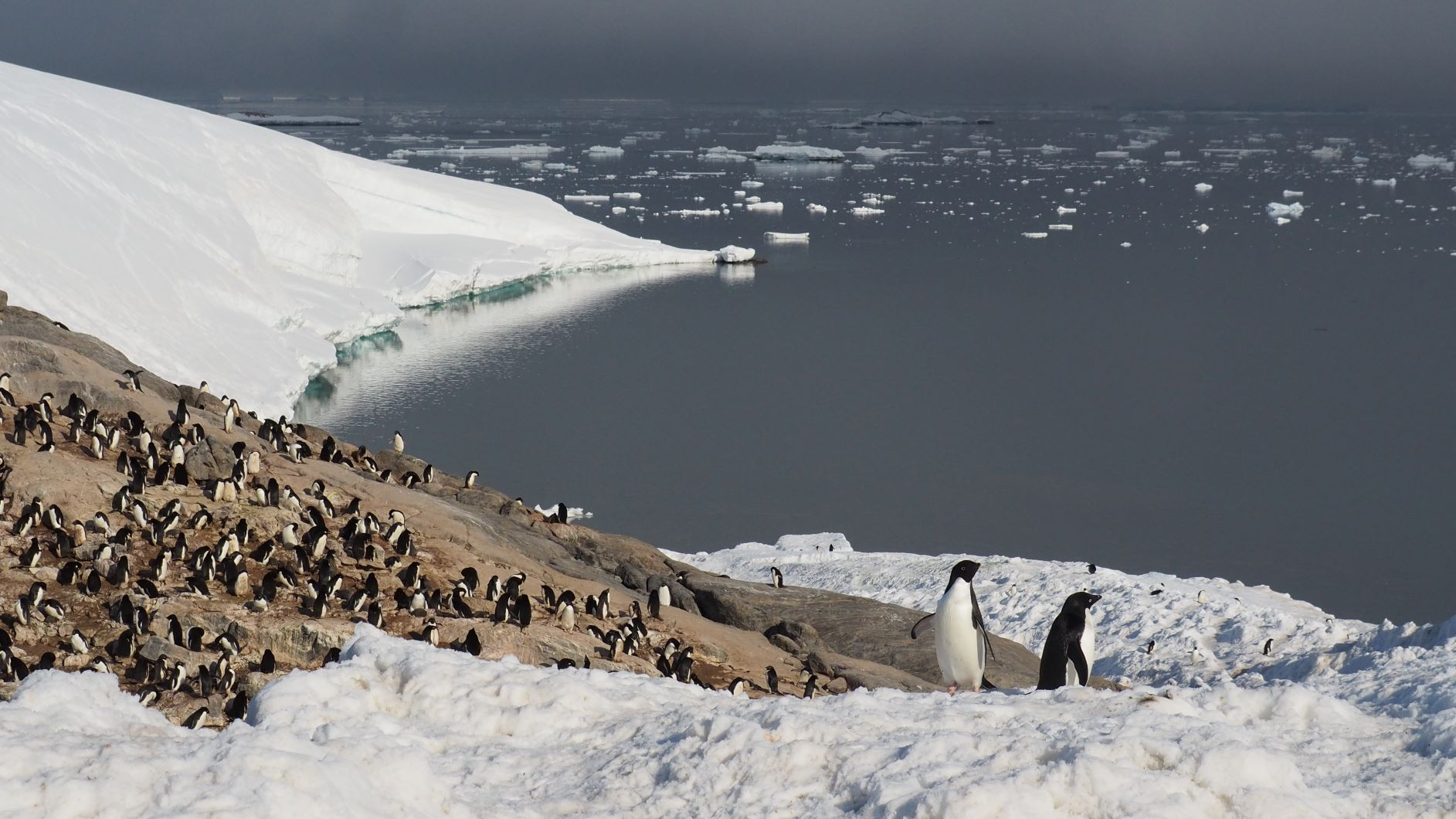 A colony of Adelie penguins breeds on a partly naked partly snow-covered rock. Behind it you can see the ice-free sea.